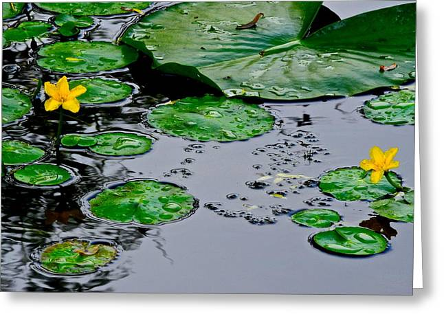 Lilly Pads Greeting Cards - Tadpole Haven Greeting Card by Frozen in Time Fine Art Photography