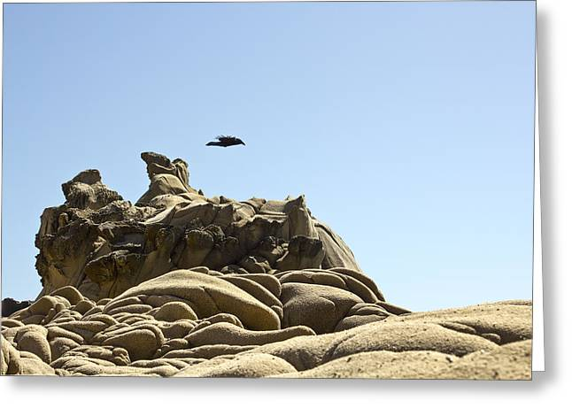 Geology Photographs Greeting Cards - Tafoni Hover Raven Greeting Card by Studio Janney