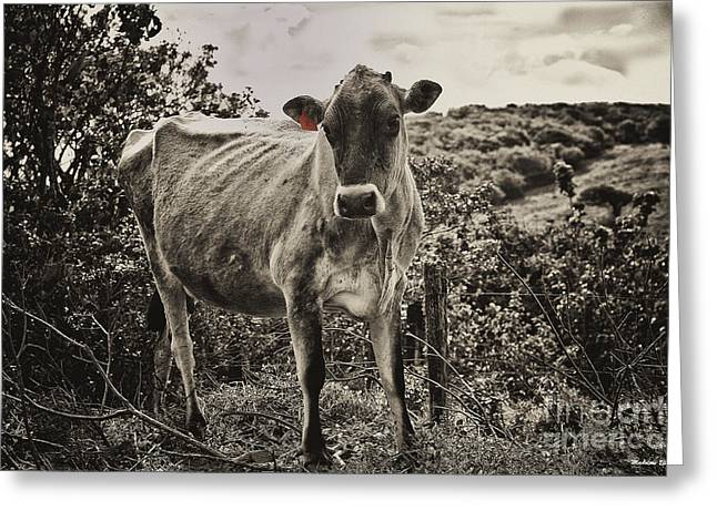 Steer Greeting Cards - Tagged Greeting Card by Madeline Ellis