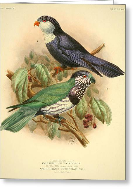 Tahiti Lory Greeting Card by J G Keulemans