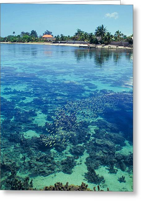 Reef Photos Greeting Cards - Tahiti Papeete Greeting Card by Anonymous