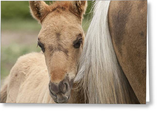 Wild Horses Greeting Cards - Tail Chewer Greeting Card by Carol Walker