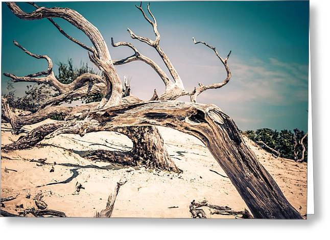 Crooked Island Dunes Greeting Cards - Tainted Wood Greeting Card by Chris Smith