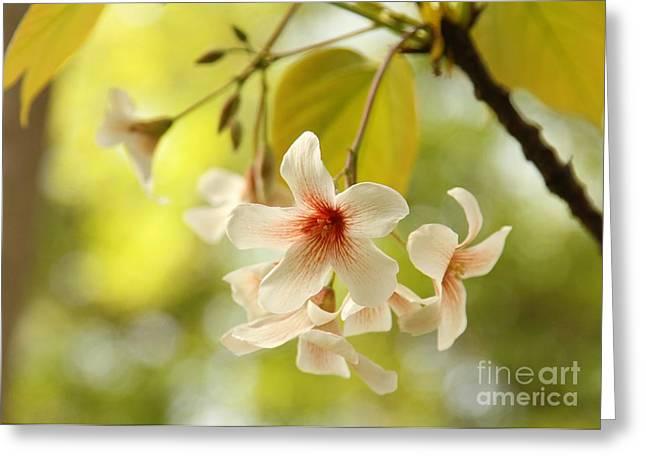 Eve Wheeler Greeting Cards - Taiwan Cherry Bloom H-1 Greeting Card by Eve Wheeler