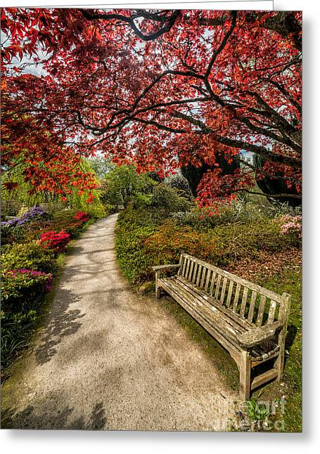 Acer Greeting Cards - Take a Break Greeting Card by Adrian Evans