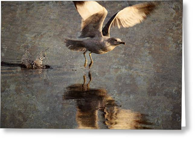 Apacheco Greeting Cards - Take Flight Greeting Card by Andrew Pacheco