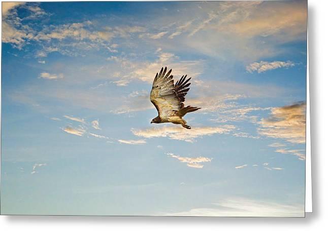 Hawks In Flight Greeting Cards - Take Flight Greeting Card by Jai Johnson