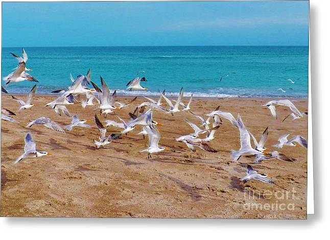 Tern Paintings Greeting Cards - Take Flight My friends Greeting Card by Judy Via-Wolff
