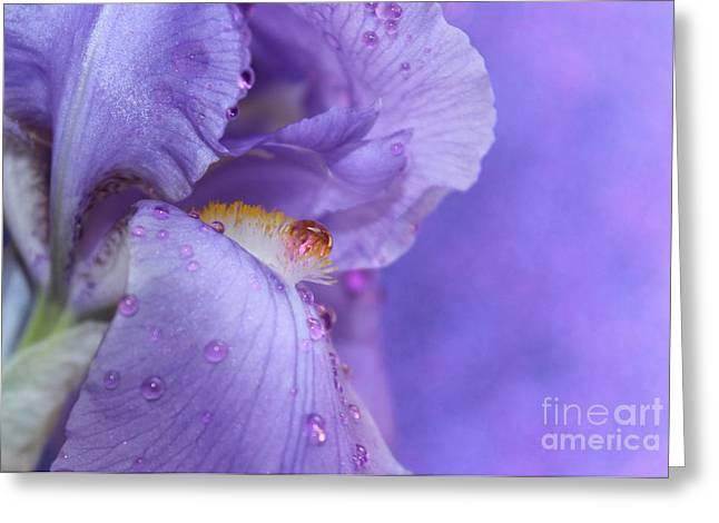 Take Me Away Greeting Card by Krissy Katsimbras