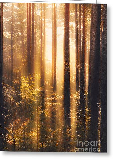 Sweden Greeting Cards - Take me Greeting Card by Happy Melvin