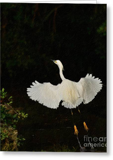 Great Birds Greeting Cards - Take Off Greeting Card by Adrian Tavano