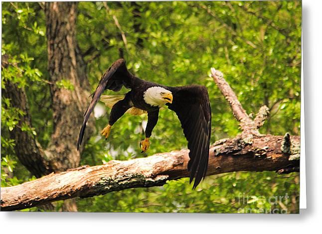 Eaglet Greeting Cards - Take Off IV Greeting Card by Jai Johnson