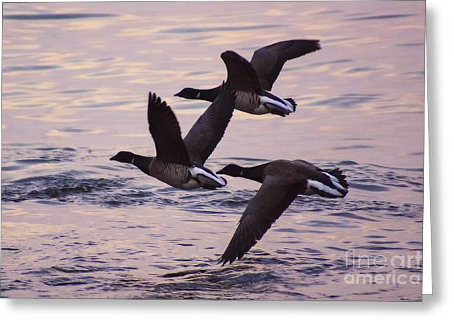 Ocean Art Photos Greeting Cards - Take Off Greeting Card by Joe Geraci