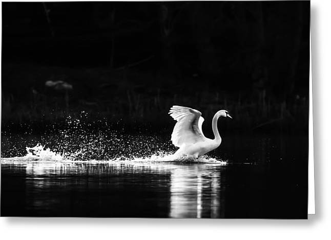 Take Off Greeting Card by Rose-Maries Pictures