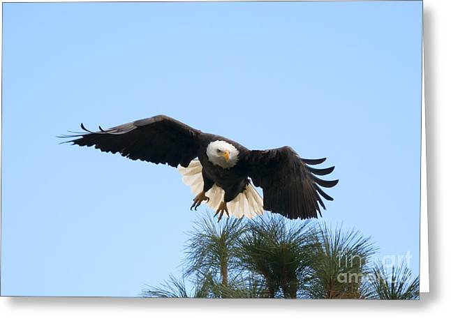 Eagle Greeting Cards - Take to the Air Greeting Card by Mike Dawson