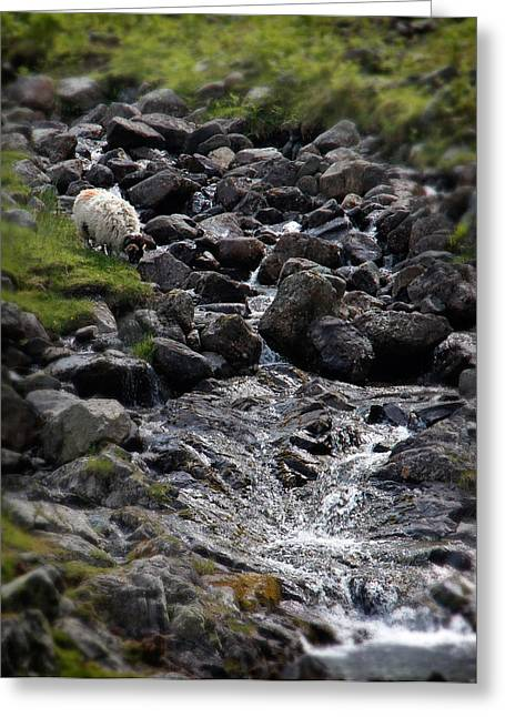 Cambria Photographs Greeting Cards - Taking a Drink at the Mountain Stream Greeting Card by Jerry Deutsch