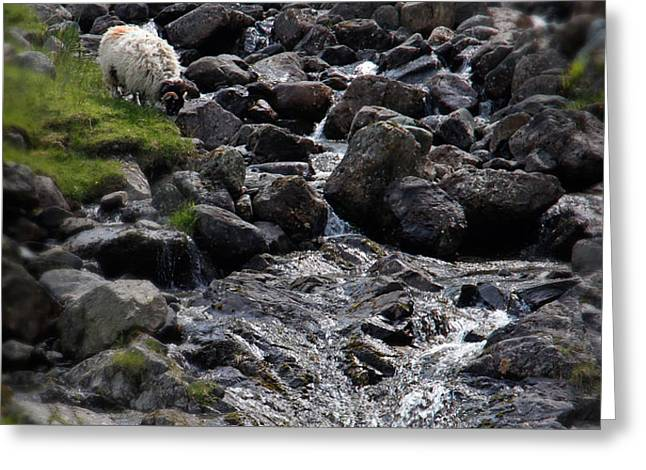 Taking a Drink at the Mountain Stream Greeting Card by Jerry Deutsch
