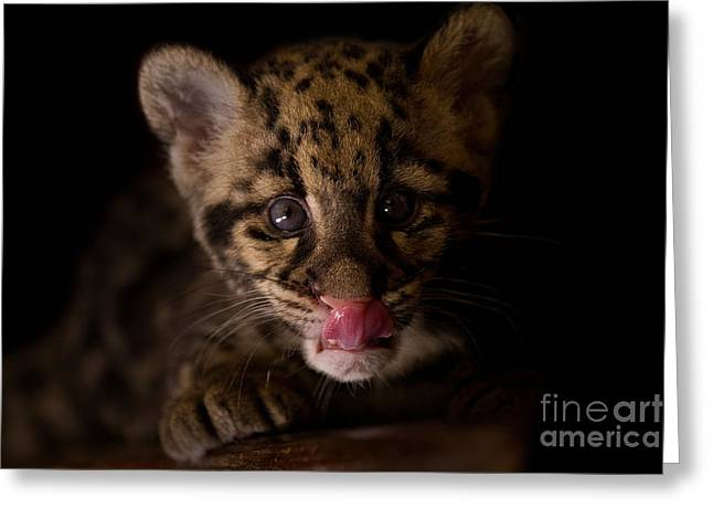 Taking A Licking Greeting Card by Ashley Vincent