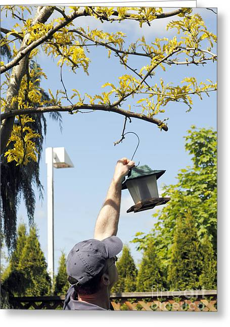 Removing Branches Greeting Cards - Taking Down Bird Feeder Greeting Card by Lee Serenethos