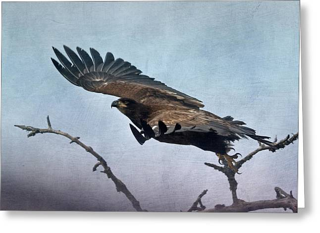 Hunting Bird Greeting Cards - Taking Flight Greeting Card by Angie Vogel