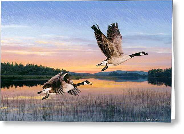 Geese Drawings Greeting Cards - Taking Flight Greeting Card by Brent Ander
