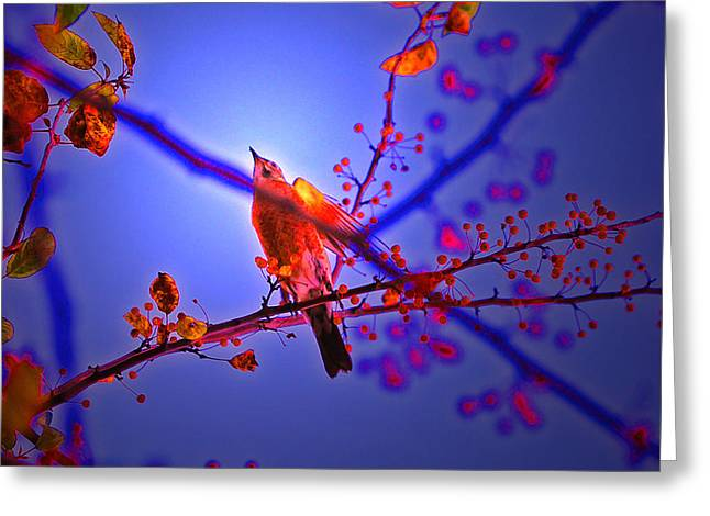 Taking Flight By Jrr Greeting Card by First Star Art