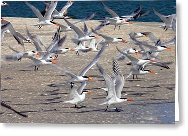 Flying Seagull Greeting Cards - Taking Flight Greeting Card by Jon Neidert