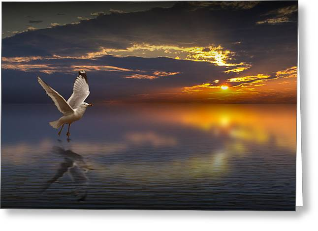 Randy Greeting Cards - Taking Flight Greeting Card by Randall Nyhof