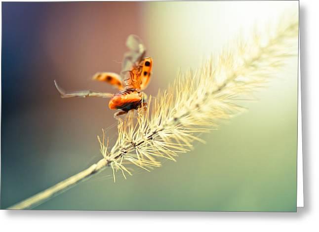 Lady Bug Greeting Cards - Taking Flight Greeting Card by Shane Holsclaw