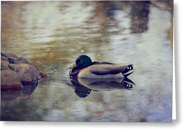 Recently Sold -  - Water Fowl Greeting Cards - Taking A Nap Greeting Card by Maria Angelica Maira
