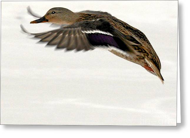 Canon Rebel Greeting Cards - Taking Off Greeting Card by John Telfer