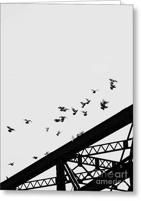 Black And White Birds Greeting Cards - Taking Off Greeting Card by Rebecca Cozart