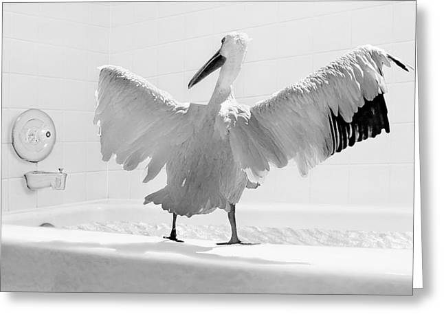 Ridiculous Greeting Cards - Taking the Plunge - Pelican - Bathroom Greeting Card by Nikolyn McDonald