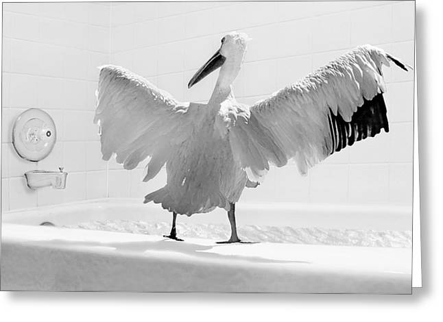 Absurdity Greeting Cards - Taking the Plunge - Pelican - Bathroom Greeting Card by Nikolyn McDonald