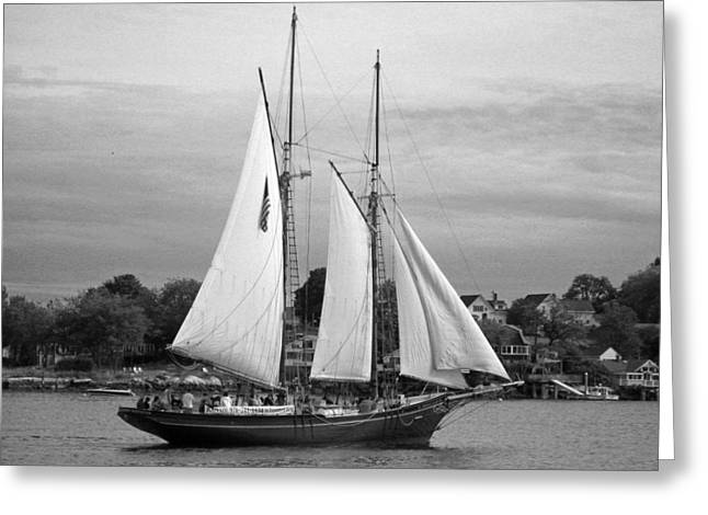 Sailing Ship Greeting Cards - Tal Ship - Black and White Greeting Card by Suzanne Gaff
