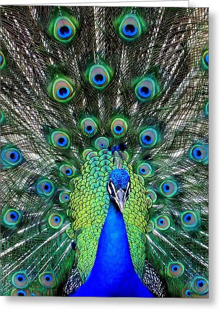 Blue And Green Greeting Cards - TALK of the WALK Greeting Card by Karen Wiles