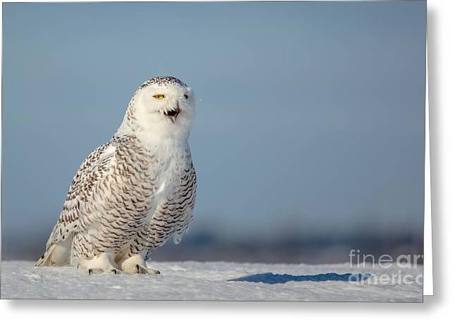 Full-length Portrait Greeting Cards - Talking Snowy Greeting Card by Cheryl Baxter