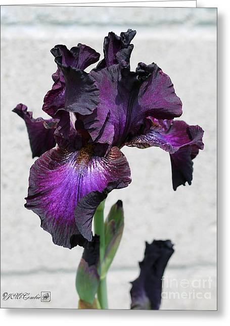 Tall Bearded Iris Named Rosalie Figge Greeting Card by J McCombie