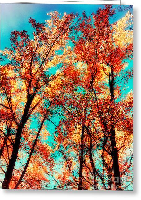 Paint Photograph Greeting Cards - Tall Fall Trees - Blue Ridge Parkway Greeting Card by Dan Carmichael