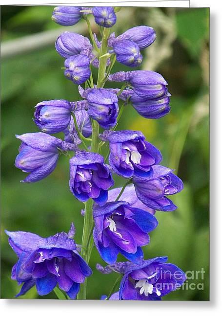 Eunice Miller Greeting Cards - Tall Garden Beauty Greeting Card by Eunice Miller