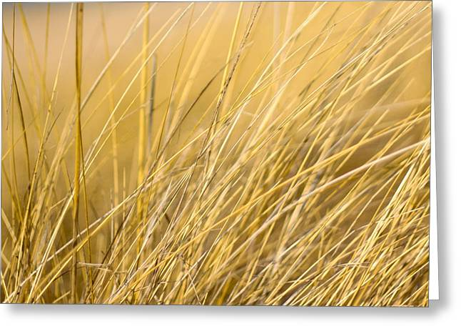 Indiana Dunes Greeting Cards - Tall Golden Grass Greeting Card by Anthony Doudt