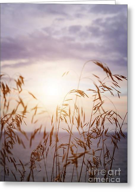 Sunflare Greeting Cards - Tall grass at sunset Greeting Card by Elena Elisseeva