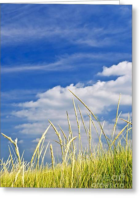 Uncut Greeting Cards - Tall grass on sand dunes Greeting Card by Elena Elisseeva
