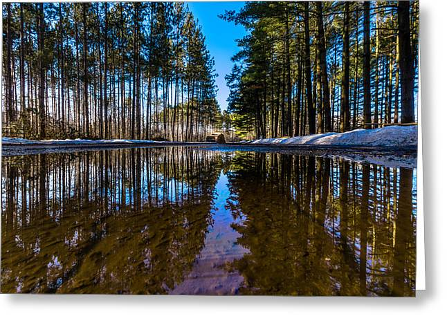 Kettle Moraine Greeting Cards - Tall Pines Greeting Card by Randy Scherkenbach