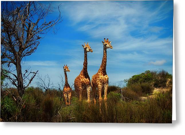 Family Love Greeting Cards - Tall Taller Tallest Greeting Card by Mountain Dreams
