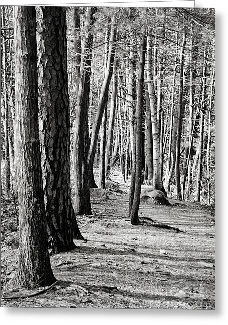 Tall Timbers  Greeting Card by A New Focus Photography
