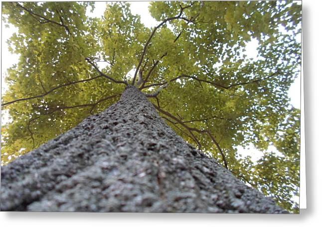 Jenna Mengersen Greeting Cards - Tall Tree Greeting Card by Jenna Mengersen