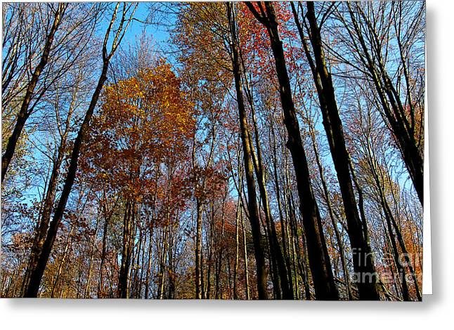 Tall Trees Autumn 2011 Greeting Card by Tina M Wenger