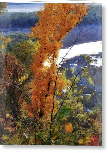 Marty Koch Greeting Cards - Tall Yellow Tree Greeting Card by Marty Koch