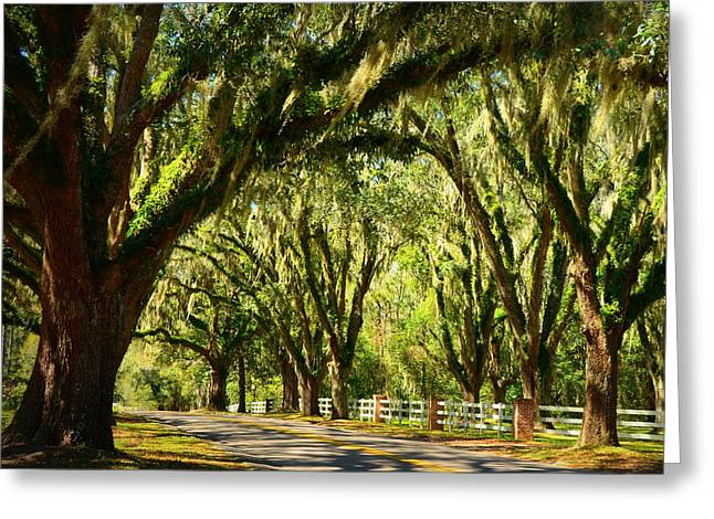 Carla Parris Greeting Cards - Tallahassee Canopy Road Greeting Card by Carla Parris